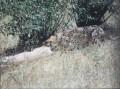 Mara 045
