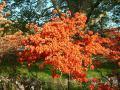 Bronx Botanical Gardens