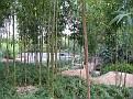 Woodley Park Japanese Gardeni019