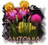 Antonia - 3094