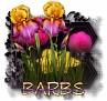 Barbs - 3094