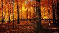 autumn-wallpaper-1920x1080-014