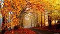 autumn-wallpaper-1920x1080-019