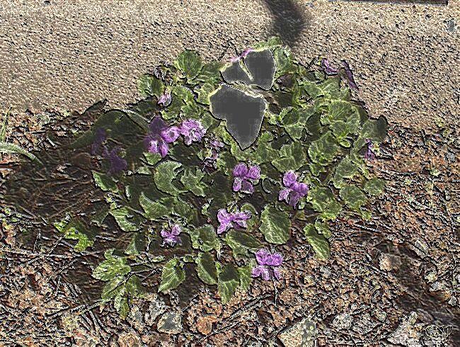 June052001 Image19 Viols CoolWax