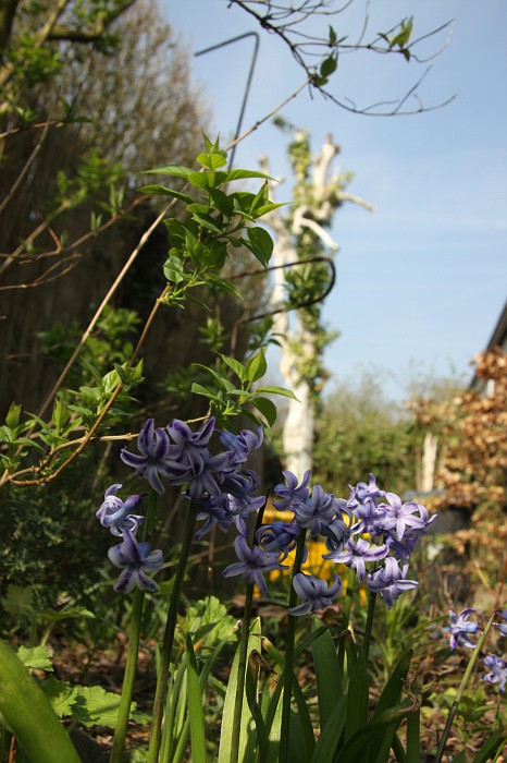 Garden 2012 March 28 (7)
