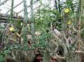 033. many plants