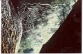 Spiderweb (worked on by Bob)