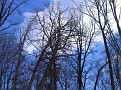 Tree Down (8)