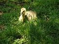 Hiding in Grass, (#49 of 132)
