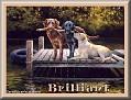 dogshavingfuntjcBrilliant