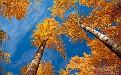 autumn-wallpaper-1680x1050-008