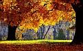 autumn-wallpaper-1920x1200-002