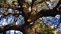 forest-wallpaper-1920x1080-033