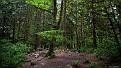 forest-wallpaper-1920x1080-096