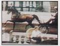 ANDRZEJEVO #338958 (Negatraz x *Andorra, by *Pietuszok) 1985-2008 bay stallion bred by Dick & Kay Patterson