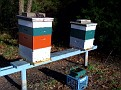 Thursday December 3 2009 8:45 AM.  Wow,  65F and Bright Sunny.  Can't believe it's December.  Even my Honey Bees are Active!!!