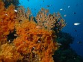 Fire and Soft Coral