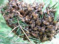 This one is a VIDEO!!!  Jersey Cape Beekeepers Meeting for Aug 09  (75)